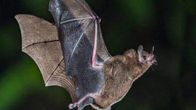 Photo of هل ينتقل فيروس كورونا من الحيوان الي الإنسان