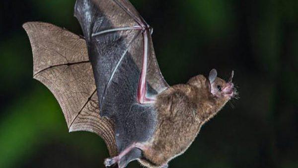 هل ينتقل فيروس كورونا من الحيوان الي الإنسان